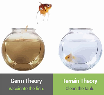 germ-theory-vs-terrain-theory.jpg